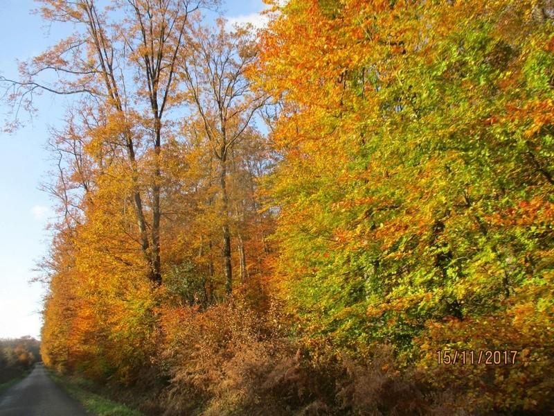 couleur d'automne  - Page 2 Foryt_36