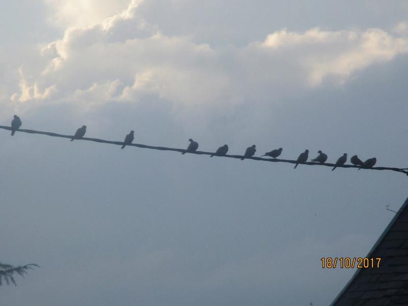 les oiseaux et petites bêtes au cours de nos balades - Page 39 Jardi112