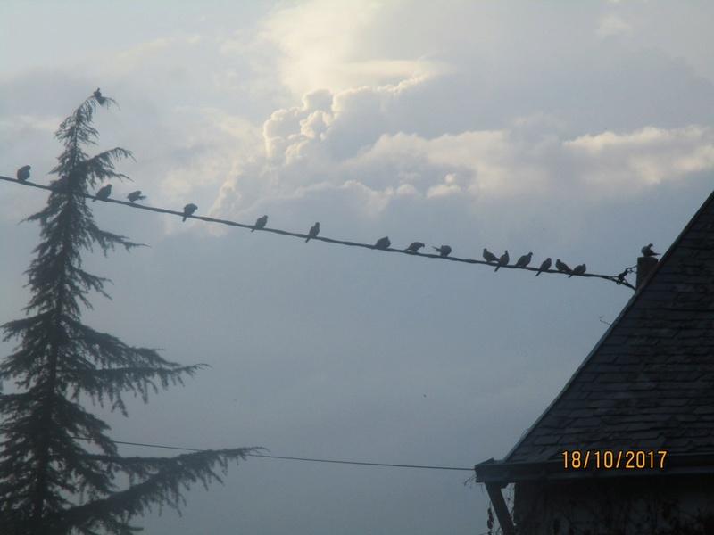les oiseaux et petites bêtes au cours de nos balades - Page 39 Jardi116