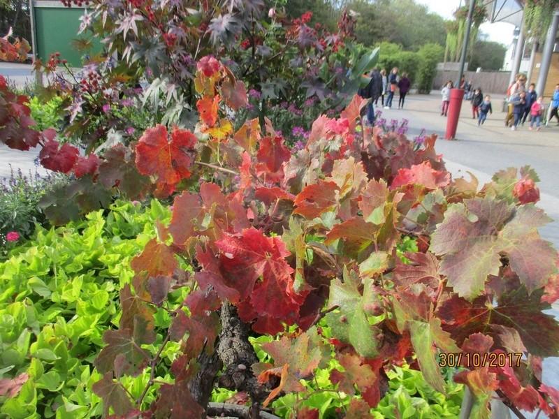 couleur d'automne  Terra219