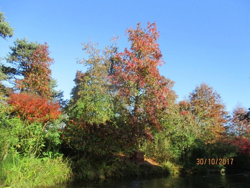 couleur d'automne  Terra_82