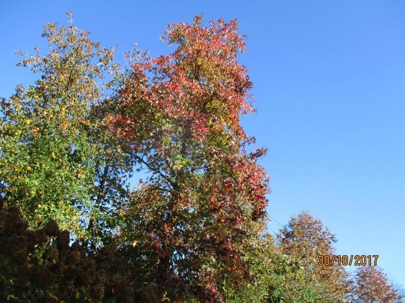 couleur d'automne  Terra_93