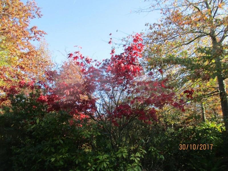 couleur d'automne  Terra_96
