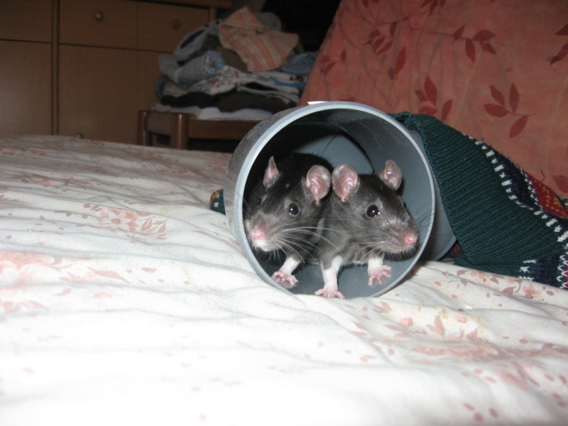 Mes crapules d'amour!!! Img_1112