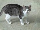 Les chats parrainés Adao_210