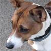 """Discussion sur les animaux """"en attente de parrainage"""" - Page 22 Belle_13"""