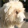 """Discussion sur les animaux """"en attente de parrainage"""" - Page 22 Diane_10"""