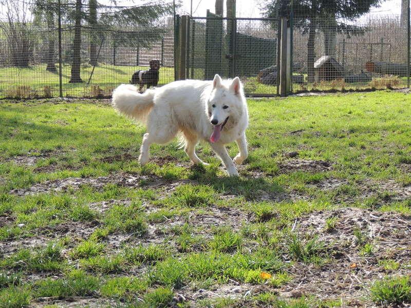 NAVY berger blanc Mercr101