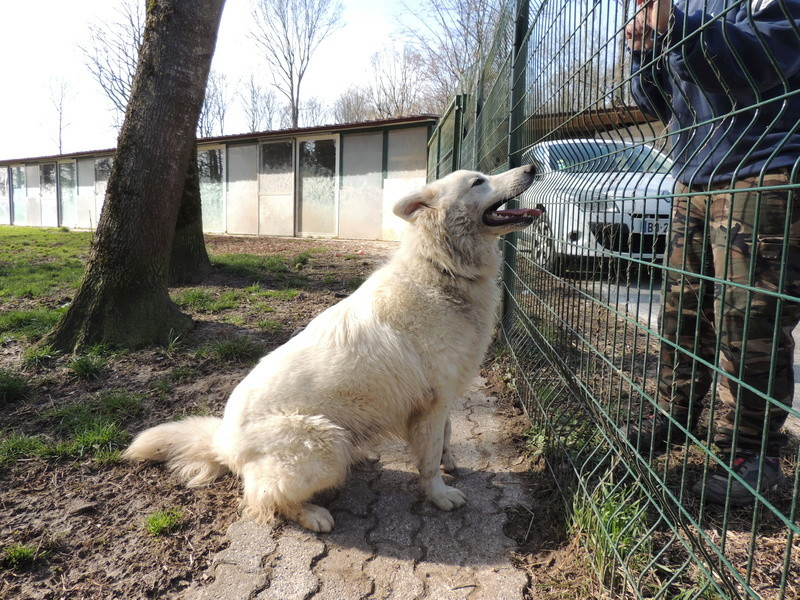 NAVY berger blanc Mercr105
