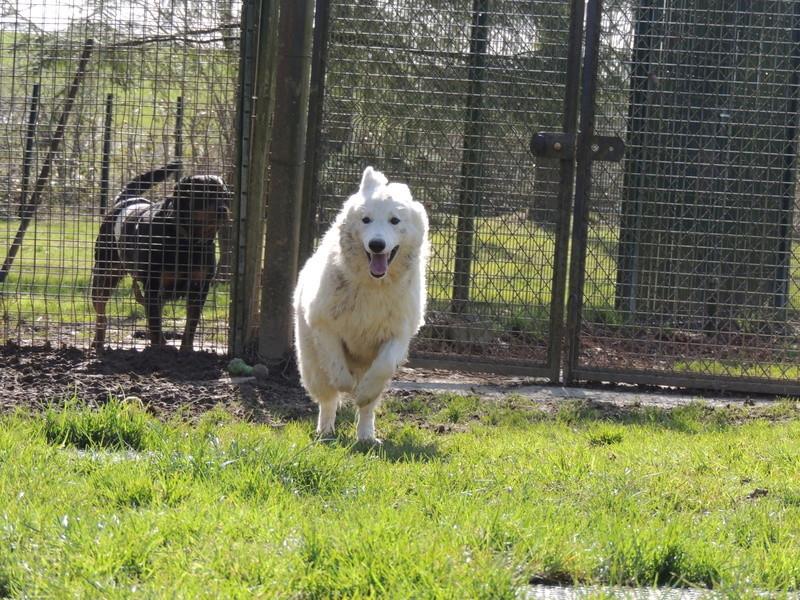 NAVY berger blanc Mercre97