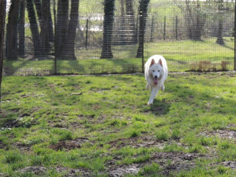 NAVY berger blanc Mercre98