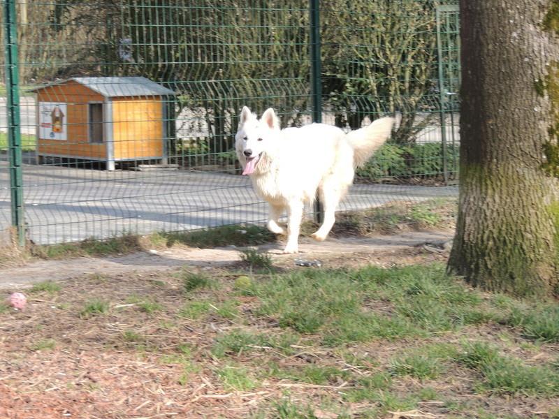 NAVY berger blanc Mercre99