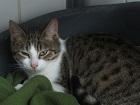Les chats parrainés Mousti11