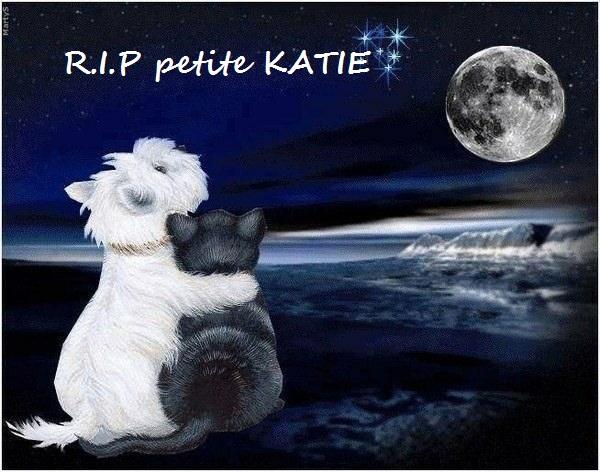 nouvelles de KATIE - Page 2 Rip_ka10