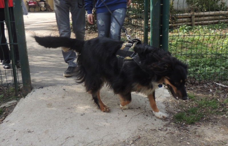 adoption de VICKY Samedi24