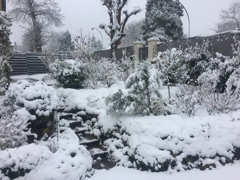 jardin 2018 !! Img_3721