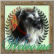 Free forum : Schnauzers-R-Us Pepper15