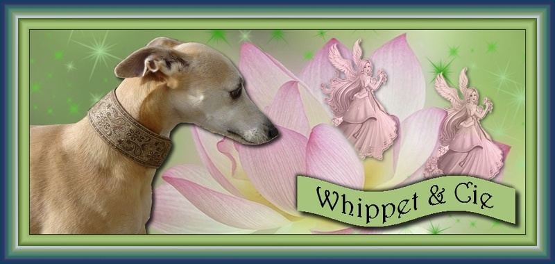 Whippets & Cie