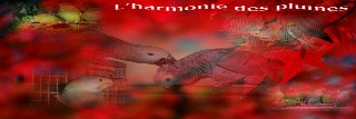 La Calopsitte - Portail Harmon11