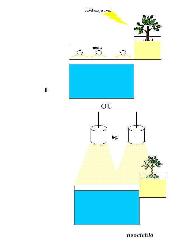 principe de l'hydroponie Hydrop11