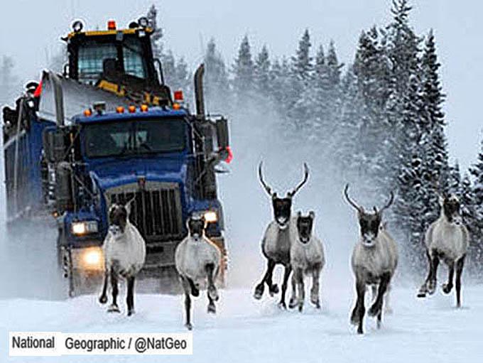 On suit les rennes... N_gyog10