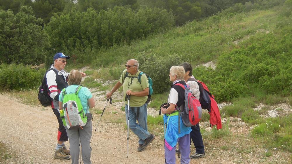 Randonnée plus calme de JM à la Fare les Oliviers  le jeudi 7 Juin 2018 00333