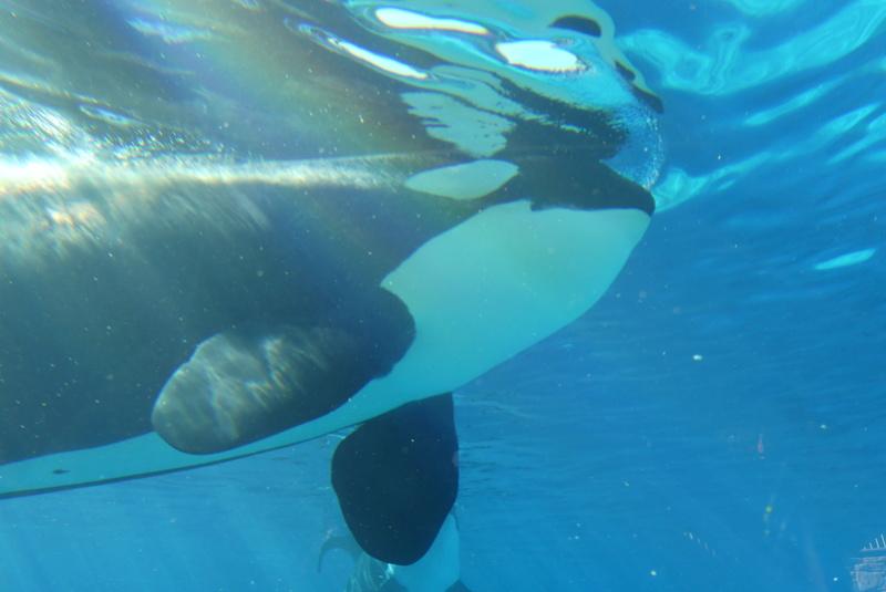 Des nouvelles de Sea World (Visite) P1000811