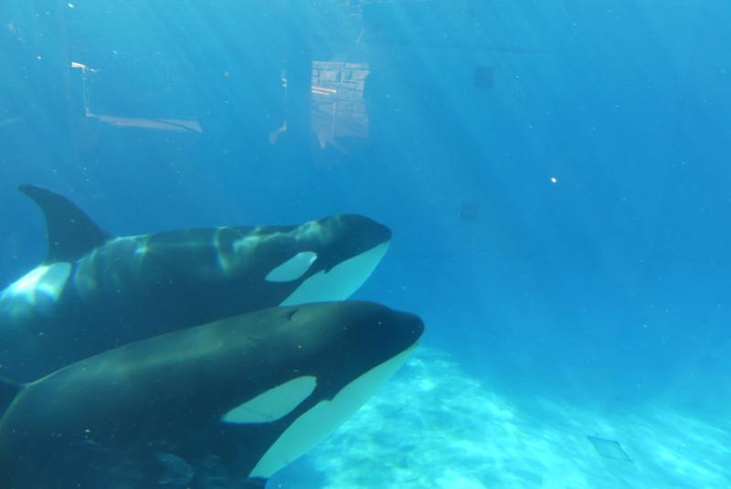 Des nouvelles de Sea World (Visite) P1000812