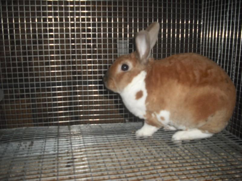 [apprendre à un lapin à faire dans sa lititère, &]Nouvelle lapine 00113