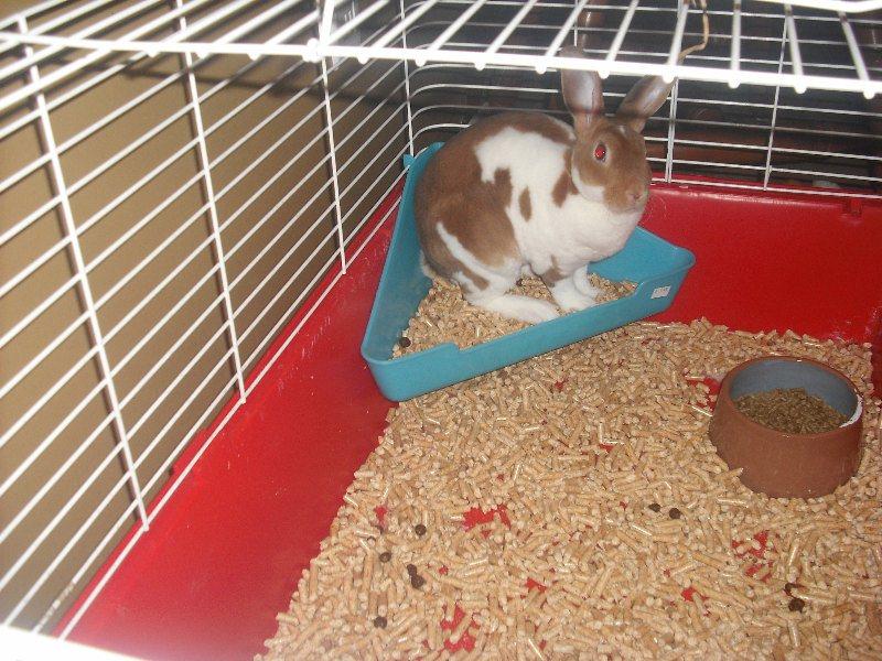 [apprendre à un lapin à faire dans sa lititère, &]Nouvelle lapine 00313