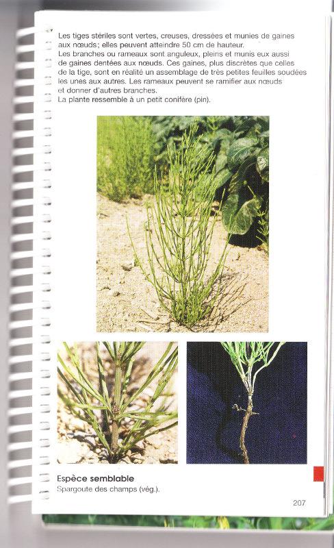 mauvaises herbes Img_0021