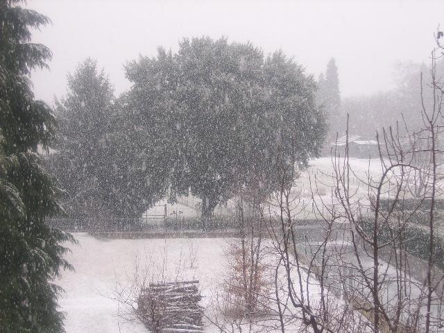 Neve Ssa51315