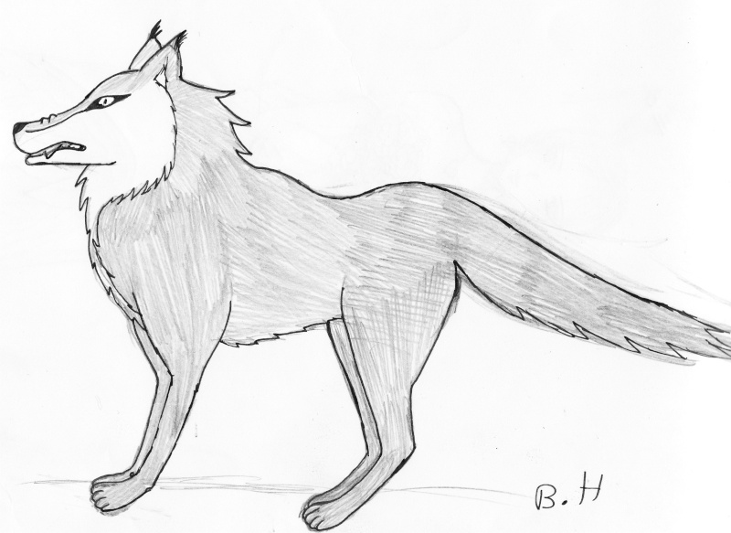 Tuto de Ven: Comment dessiner un loup Loup10