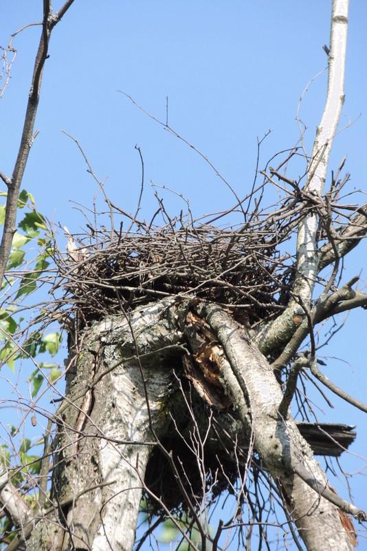 à qui appartient ce nid? Dscn9111