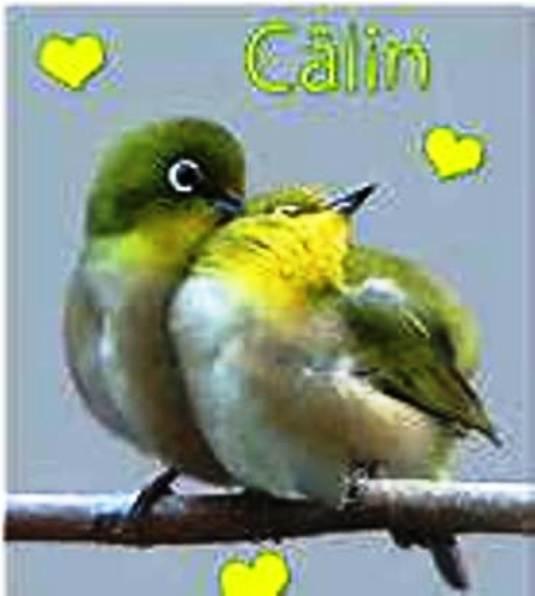 Hug day, journée des calins (21 janvier) Calint11