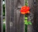 Avec Dieu dans notre vie, aucun échec ne sera jamais définitif  __579011