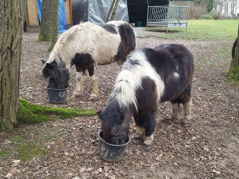 PRUNELLE - ONC poney née en 1986  - adoptée en octobre 2012 par Prosper - Page 4 20180125