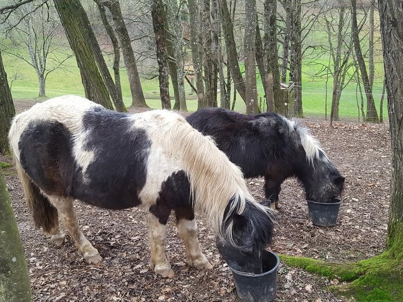 PRUNELLE - ONC poney née en 1986  - adoptée en octobre 2012 par Prosper - Page 4 20180126