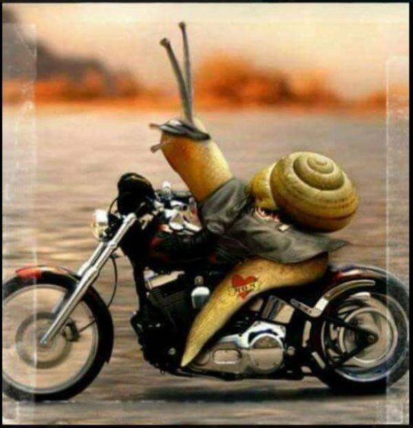 Combien de breakoutboy sur le Forum Passion-Harley ?? - Page 20 Bkouts10