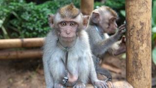 'Bali een hel voor wilde dieren, toeristen blijf weg bij dierenshows' 1113