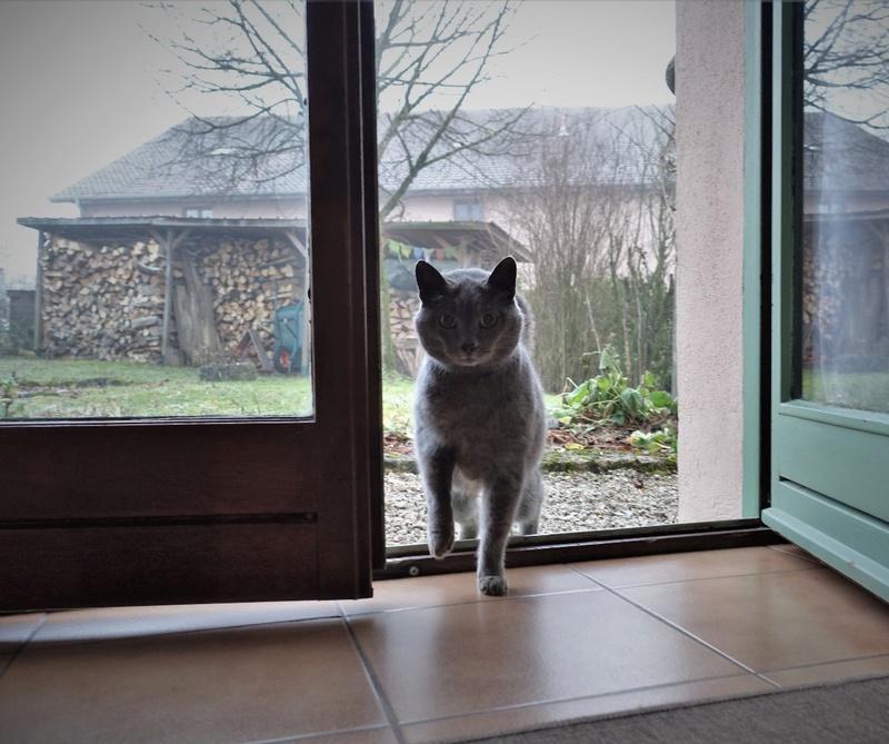 j ' adore mon chat !!! - Page 14 Dsc00132