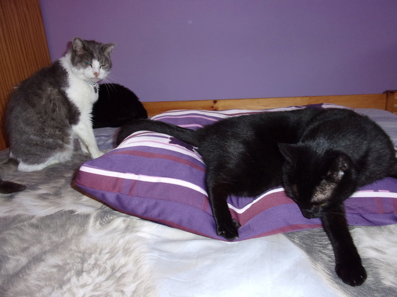 Paniers Handi'Cats !! - Page 3 107_0518