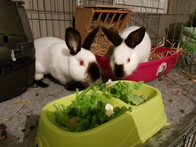 Cléa et Jewel, pinoux femelles aveugles ! 25463810