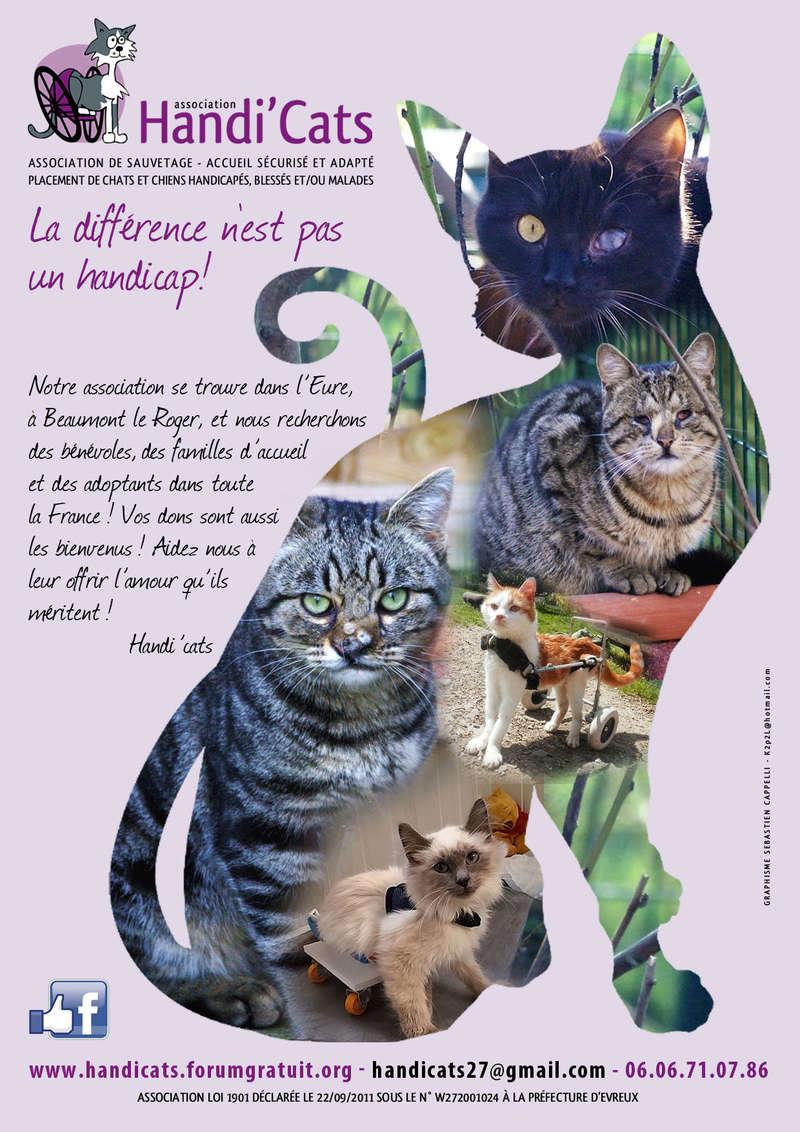 Affiche Handi'cats Affich10