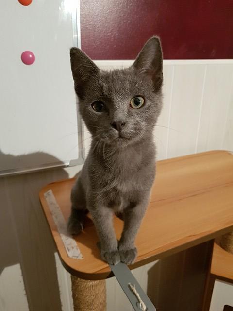 DOBBY chaton trouvé peu avant Noël ! Dobby911