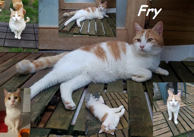 FRY : annonce type pour sites gratuits Fry1510