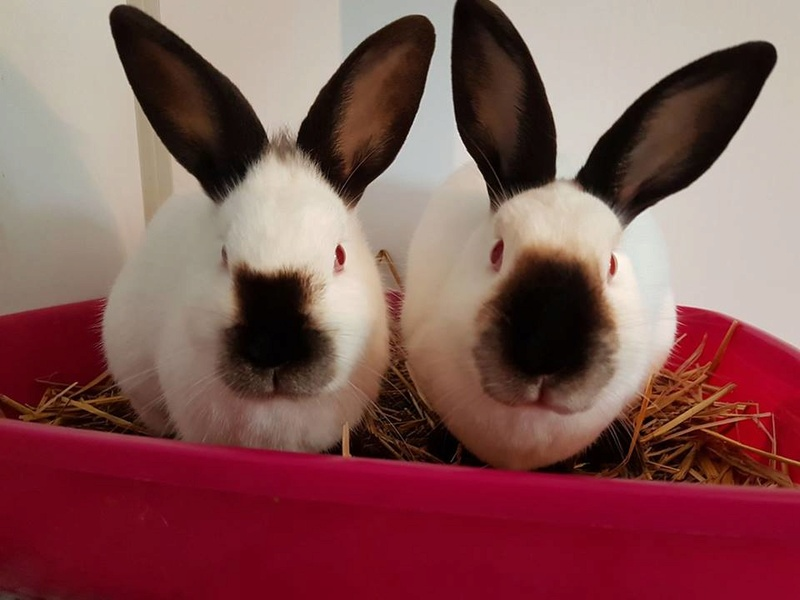 Cléa et Jewel, pinoux femelles aveugles ! Jewel310