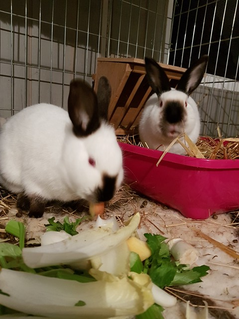 Cléa et Jewel, pinoux femelles aveugles ! Jewel_10