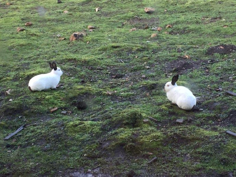 Perceval et Karadoc, pinoux mâles en mauvais état Karado10