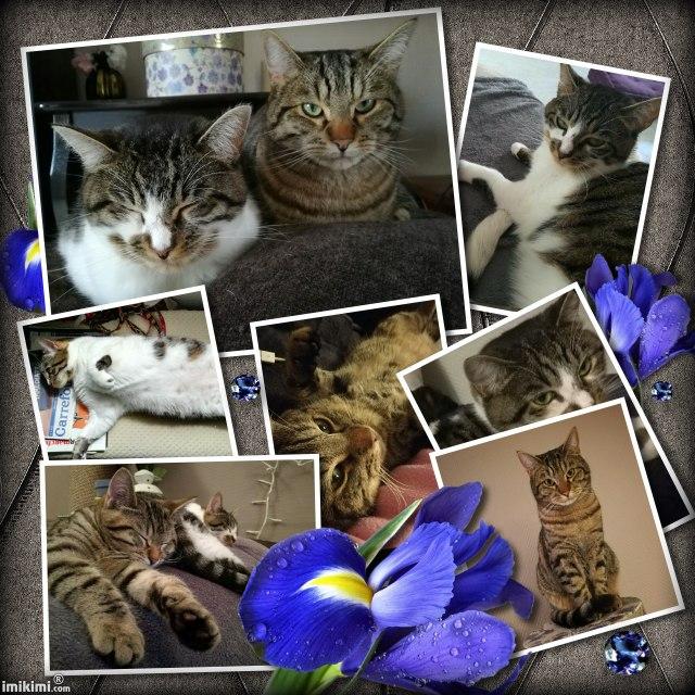 LOLLIPOP et CUPCAKE, chatte femelle et son fiston Lollip25
